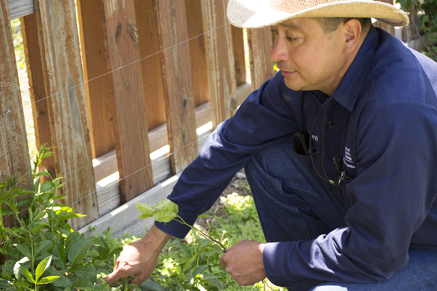 SE lead groundskeeper Marc Villanueva not only rescues wildlife, but he also cares for the Butterfly Waystation as well as the bees on campus.  Photos by Katelyn Townsend/The Collegian