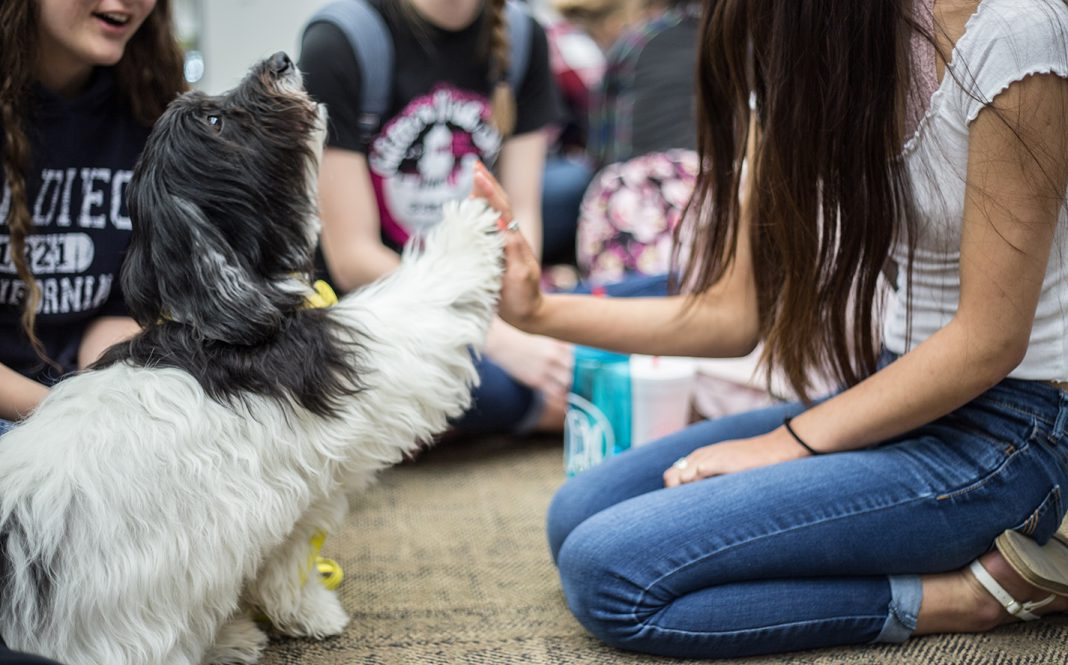 Mandie the dog high-fives NE student Nikki Bellinger during NE Campus' Paws for Finals event April 30 in the campus' library. Paws Across Texas Incorporated provided the therapy dogs for the students to relax as they prepare for finals. See more photos on page 7.