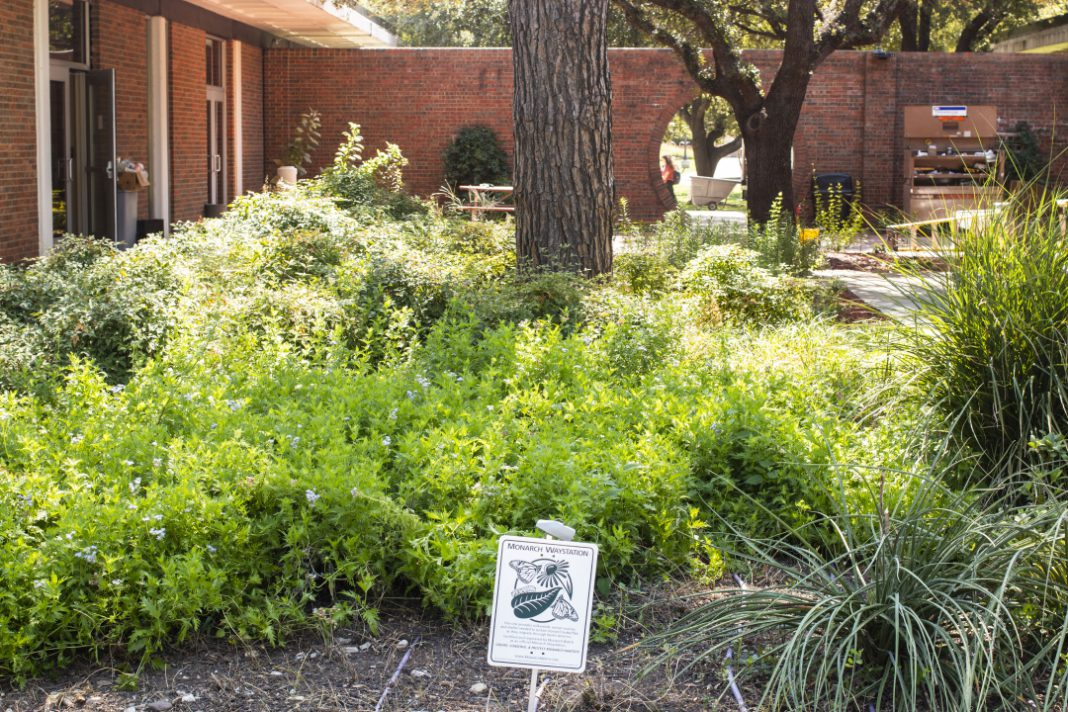 Preservation areas are set up around South Campus in the migratory path of monarch butterflies to provide a shelter to help fight the decline of this endangered species.
