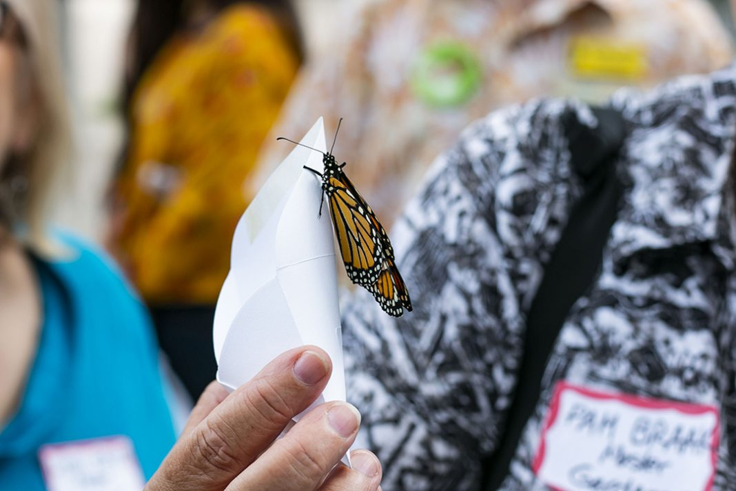 Following the Tarrant County mayors summit, attendees were given envelopes with a monarch butterfly in it to release Sept. 20 on South. The butterflies are a new generation of the endangered species.