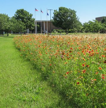 South Campus wants to set aside land to preserve monarch butterflies. The Ecosystem Project is taking steps toward the goal by starting an action group and planting milkweed.